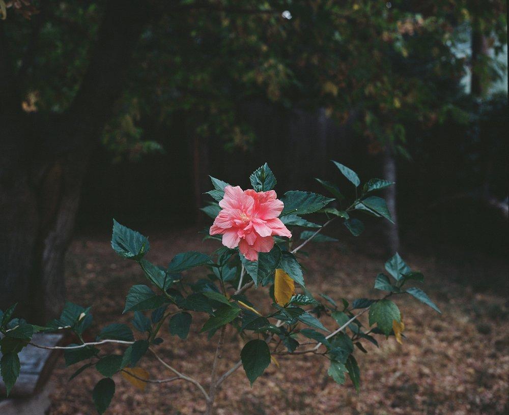Bloom #1.JPG