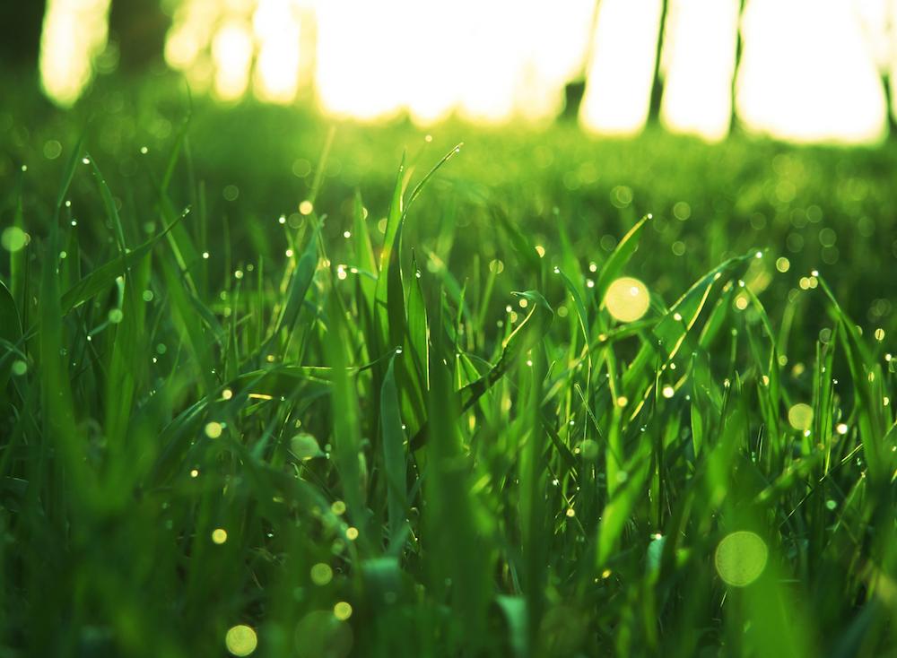 bigstock-Green-grass-13815527-small.jpg