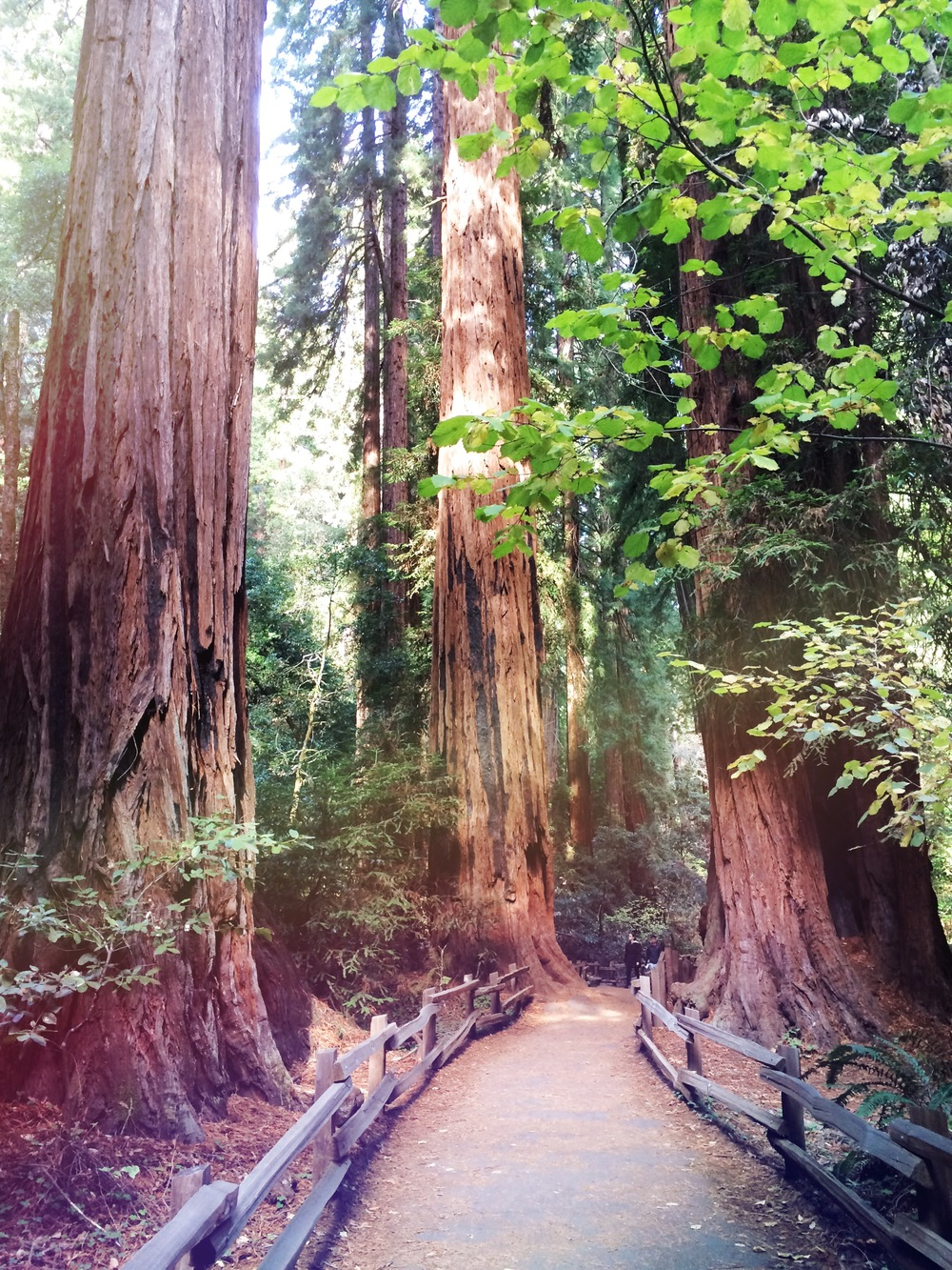 Muir Woods, California. The Redwoods spoke to me. One of the most inspirational places I've been to.