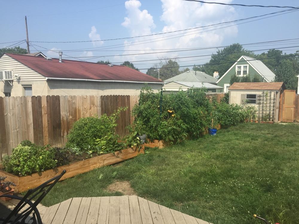 Garden 45, 9-3-15.JPG