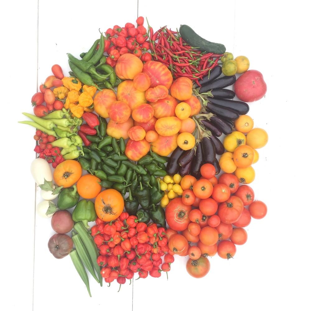 Harvest 10.JPG