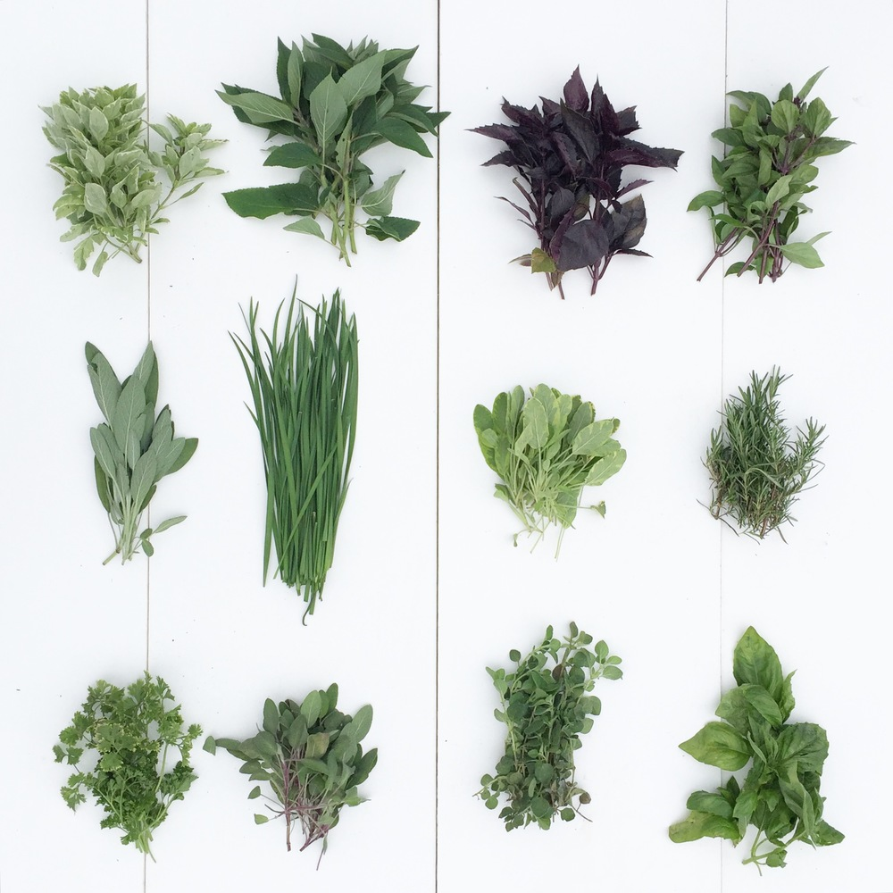Herbs (in grid pattern).JPG