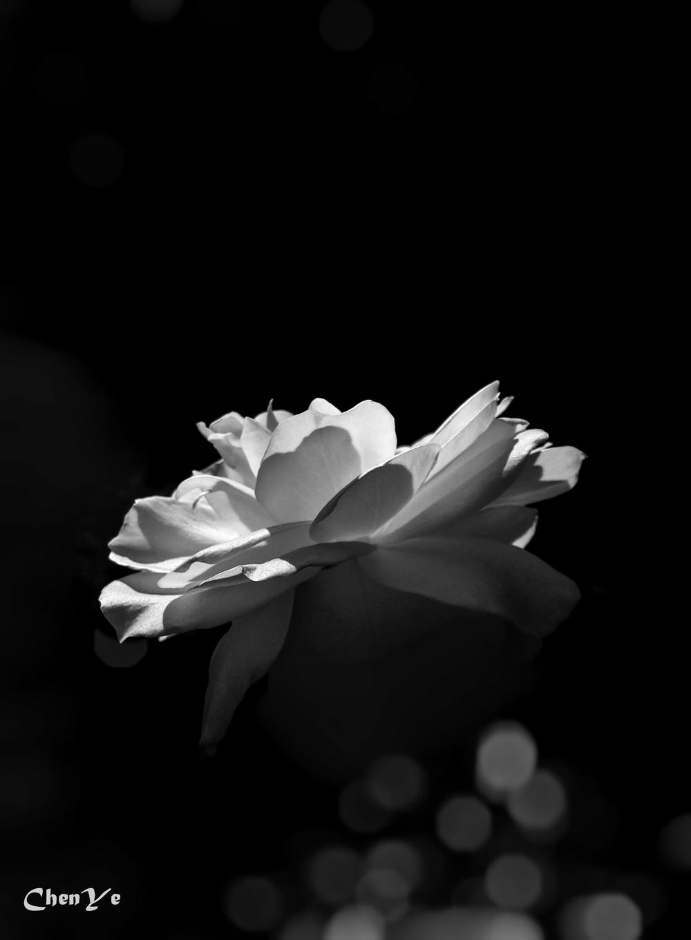 Flower bw.jpg