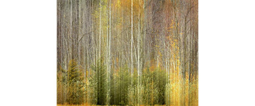 John Isaac_Landscape 2_28x22_$1500.jpg