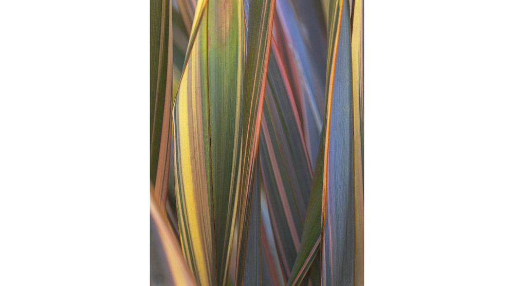 John Isaac_Tapestry_22x28_$1500.jpg