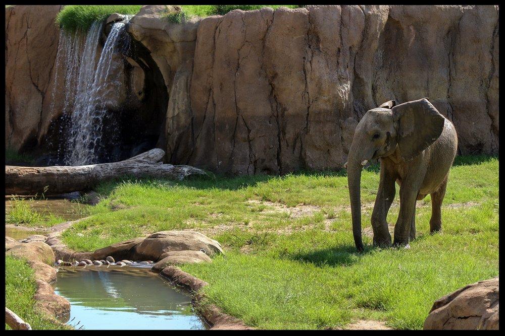 Take off (literally!) on a U.S. Swaziland Elephant Tour