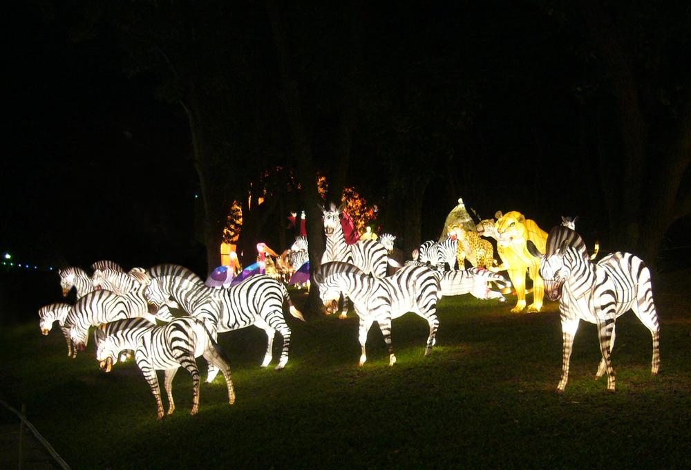 Zebra lanterns