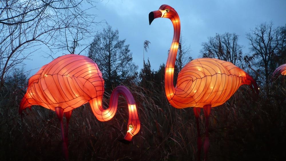 Flamingo lanterns