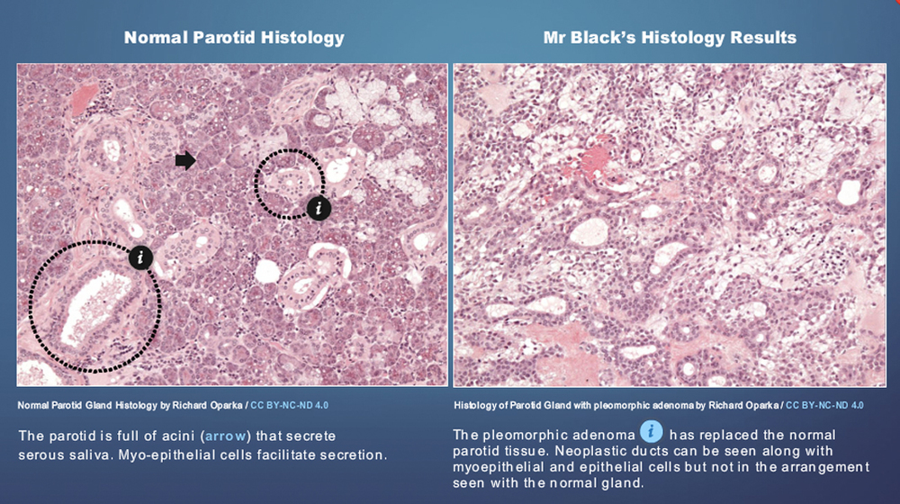 Medical_Interactive_Histology_Resources.jpg