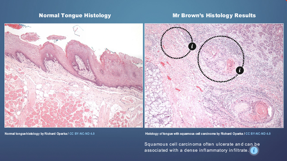 Medical_Interactive_Histology_Resources_v03.jpg