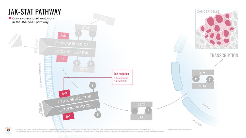 JAK-STAT_pathway_Cancer_Targets.png