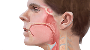 ANATOMY OF THE PHARYNX MEDICAL ILLUSTRATION   Read More