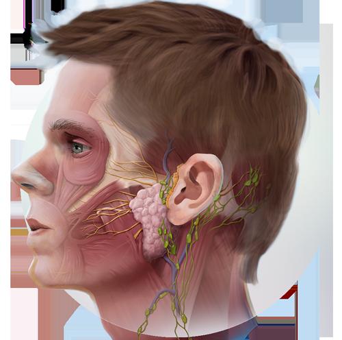 medical_illustration_img.png