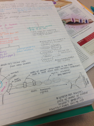 Good memorization strategy is key to biology. I love drawing pictures to link concepts, structures, and definitions.