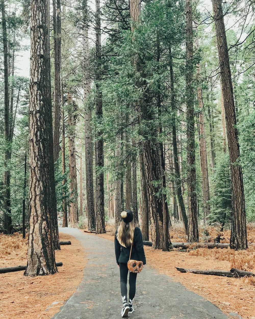 TREEEEES.jpg