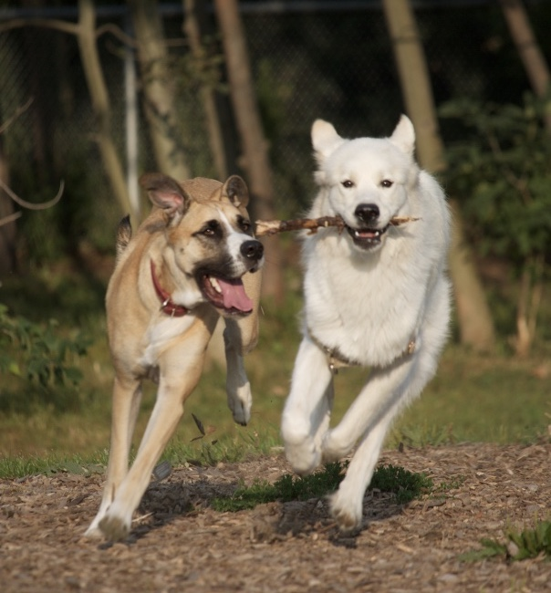 Dog Walking -