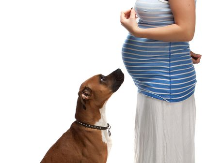 dog and pregnant belly.jpg