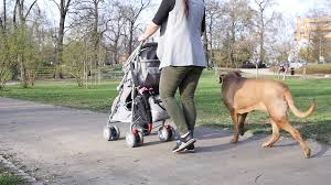 dog with stroller.jpg