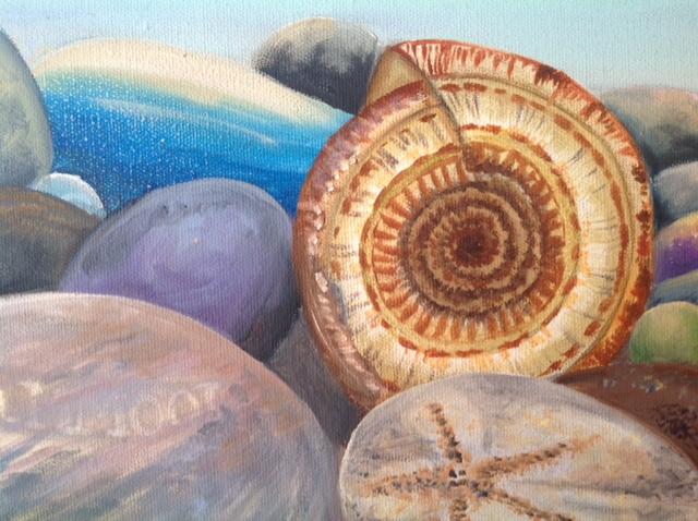 Sundial Seashell