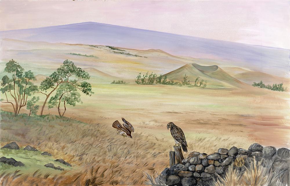 Hawaiian Hawks and Mauna Loa