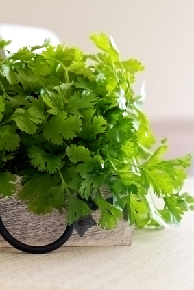 Cilantro in a bunch!
