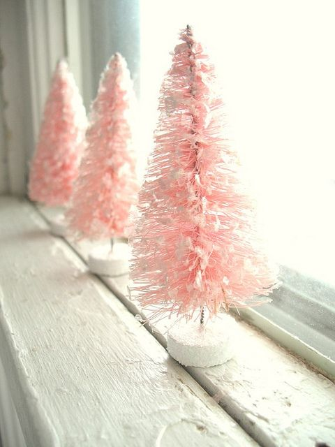 Pink bottle brush tree.jpg