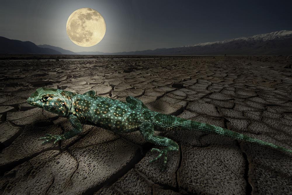 lizardMoon.jpg