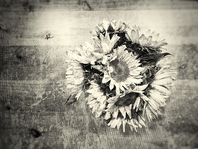 A lo-fi sunflower shot from up high.  #sunflower #flowers #woodtable #coffeeshop @neckarcoffee #cafeculture #lofi #grainy #grunge #blackandwhite #monochromatic #monochrome #blackandwhiteisworththefight #lookingdown #fromabove #iphone8plus #snapseed