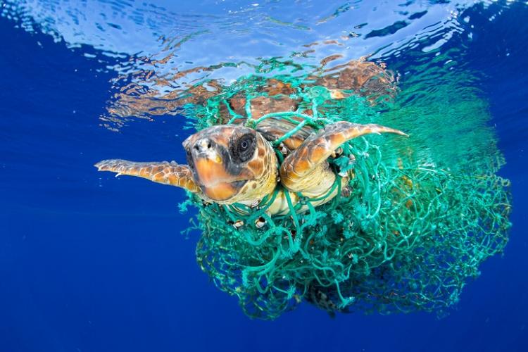 A foto de Francis Pérez, da Espanha, venceu o primeiro prêmio da categoria  'Natureza' . Mostra uma tartaruga envolvida por restos de redes na costa de Tenerife