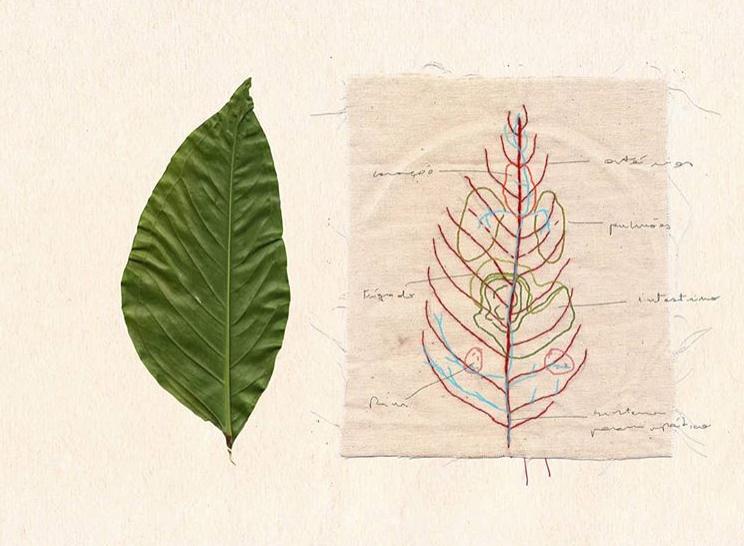 20 - 'O aprendiz de Botânica'