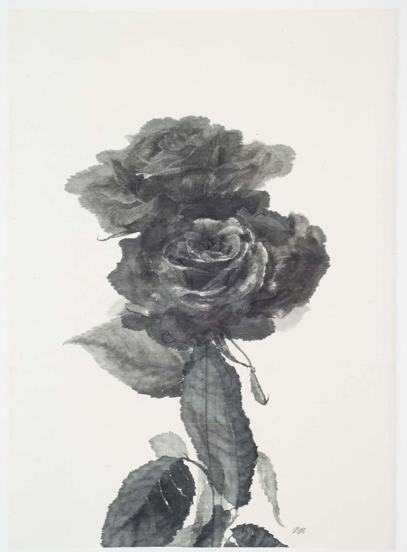 %22Two Roses XXXVII%22 2008, 29 X 21 inches Sumi ink.jpg