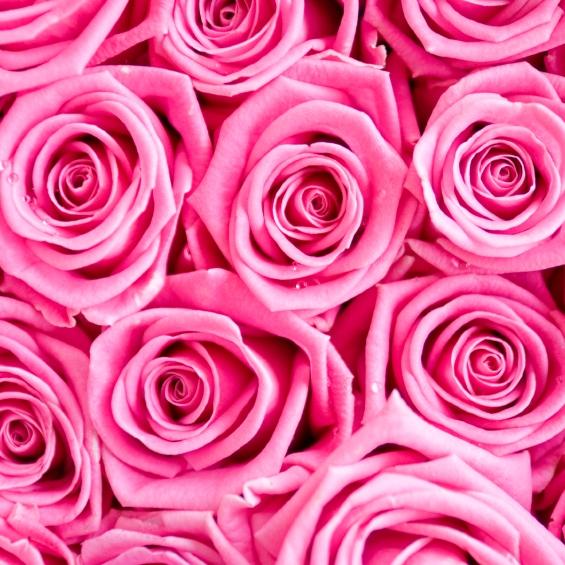 Roses Pink.jpg