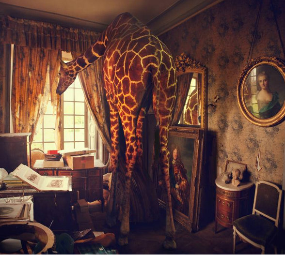Saatchi Art Artist Miss Aniela; Digital 2012 Photography High & Hungry, 33, large. Saatchi-exhibited. LAST LARGE AVAILABLE, MEDIUM SOLD OUT - Google Chrome 7272015 103410 AM.jpg
