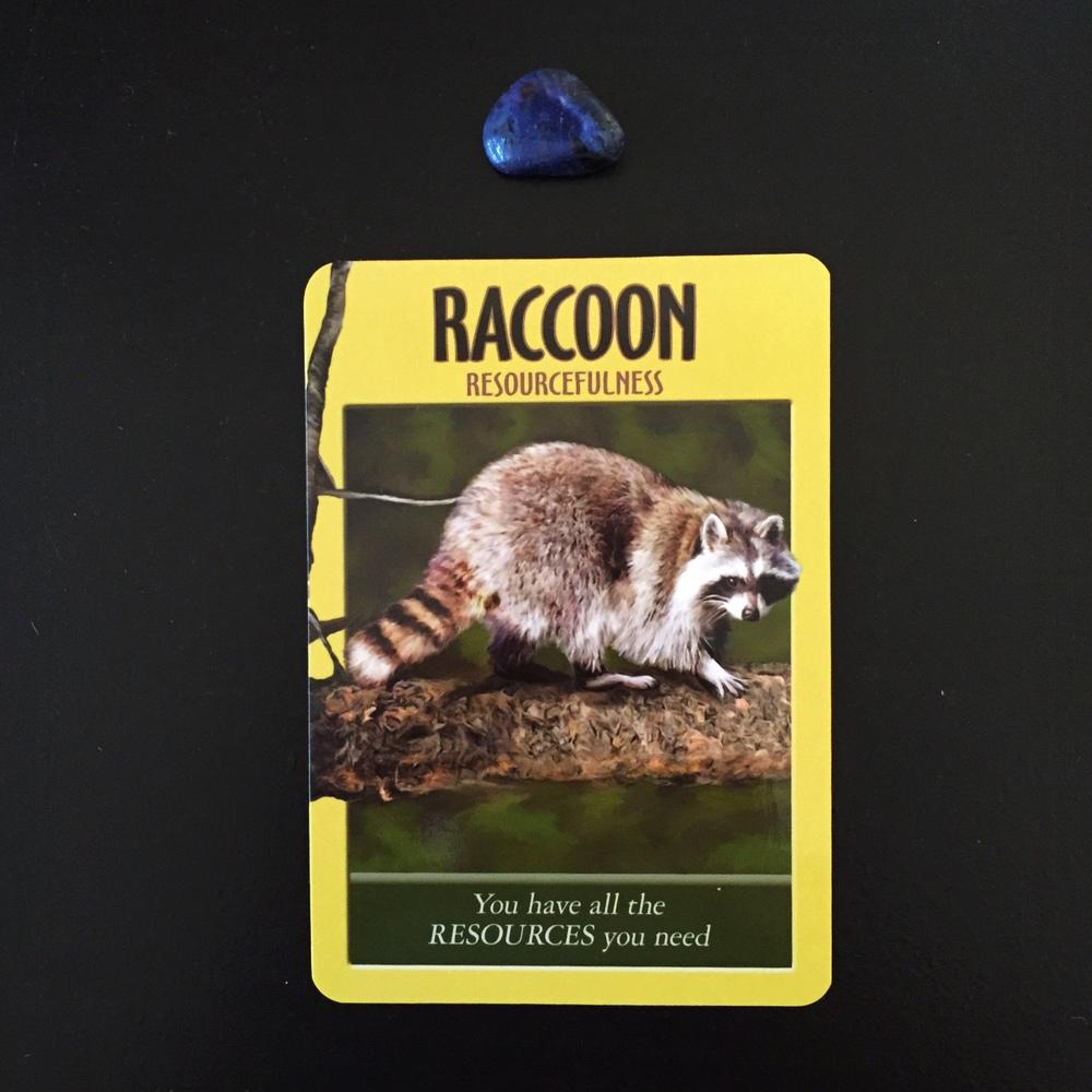 Raccoon Power Animal