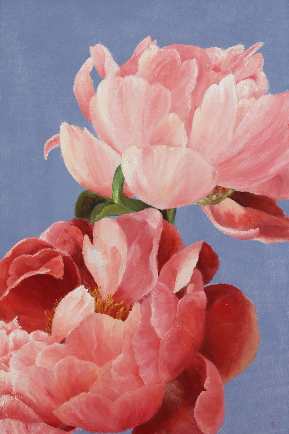 """Two Peonies, 36""""x24"""", oil on canvas, 2015"""
