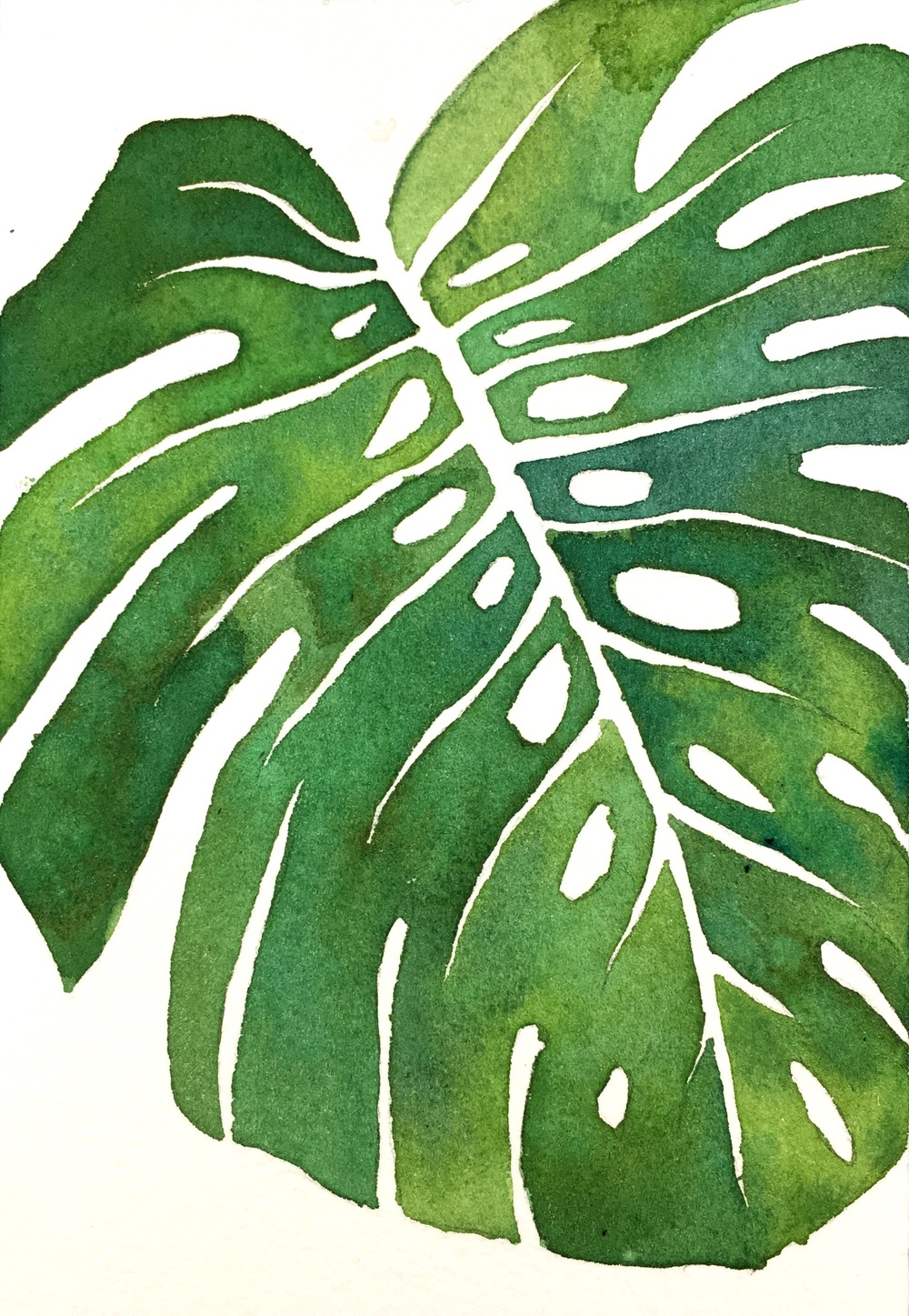 [Day94 of 100] Monstera