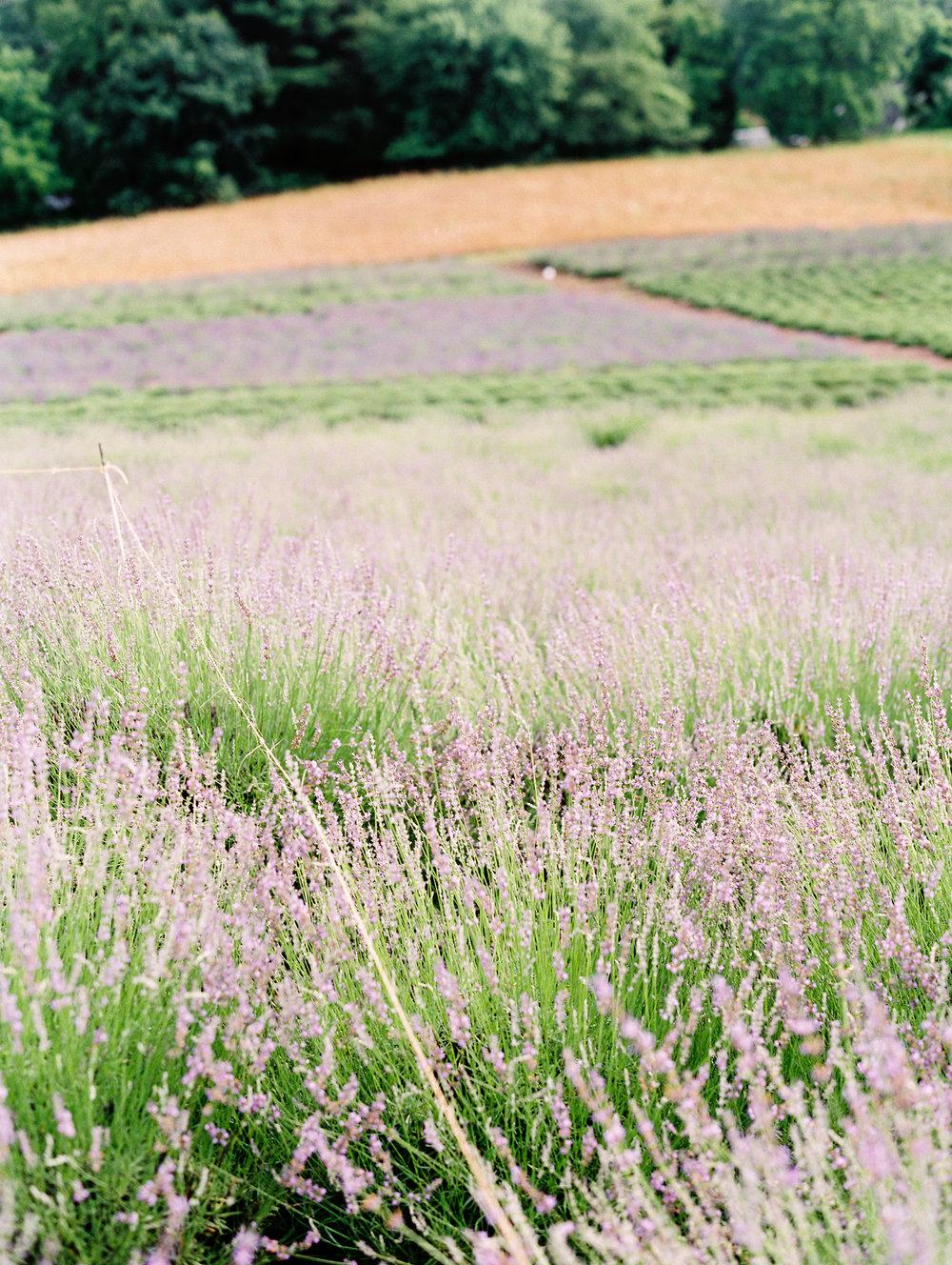 Kerri+Austin+Lavender+Field+Engagement-31.jpg
