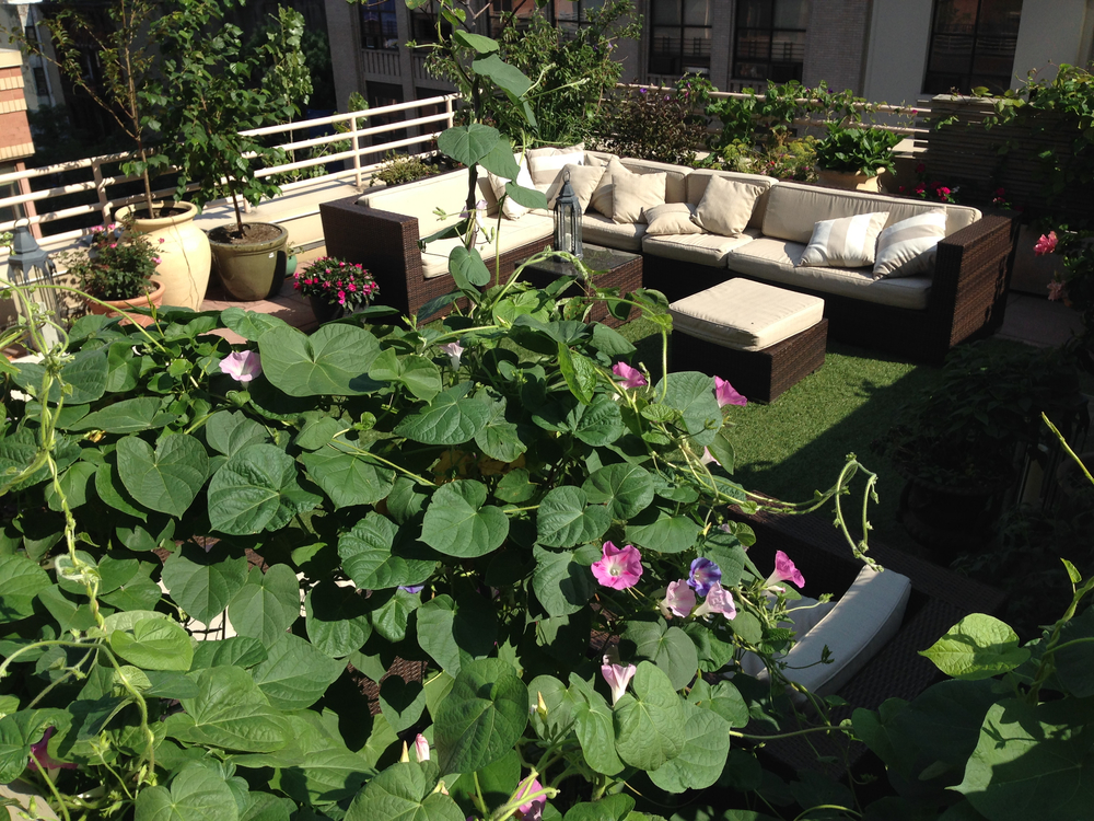 Terrace - 07-3.jpg