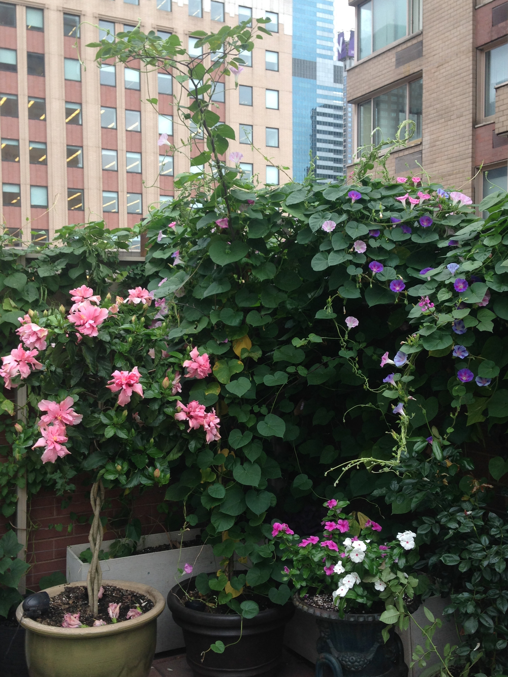 Terrace - 19.jpg