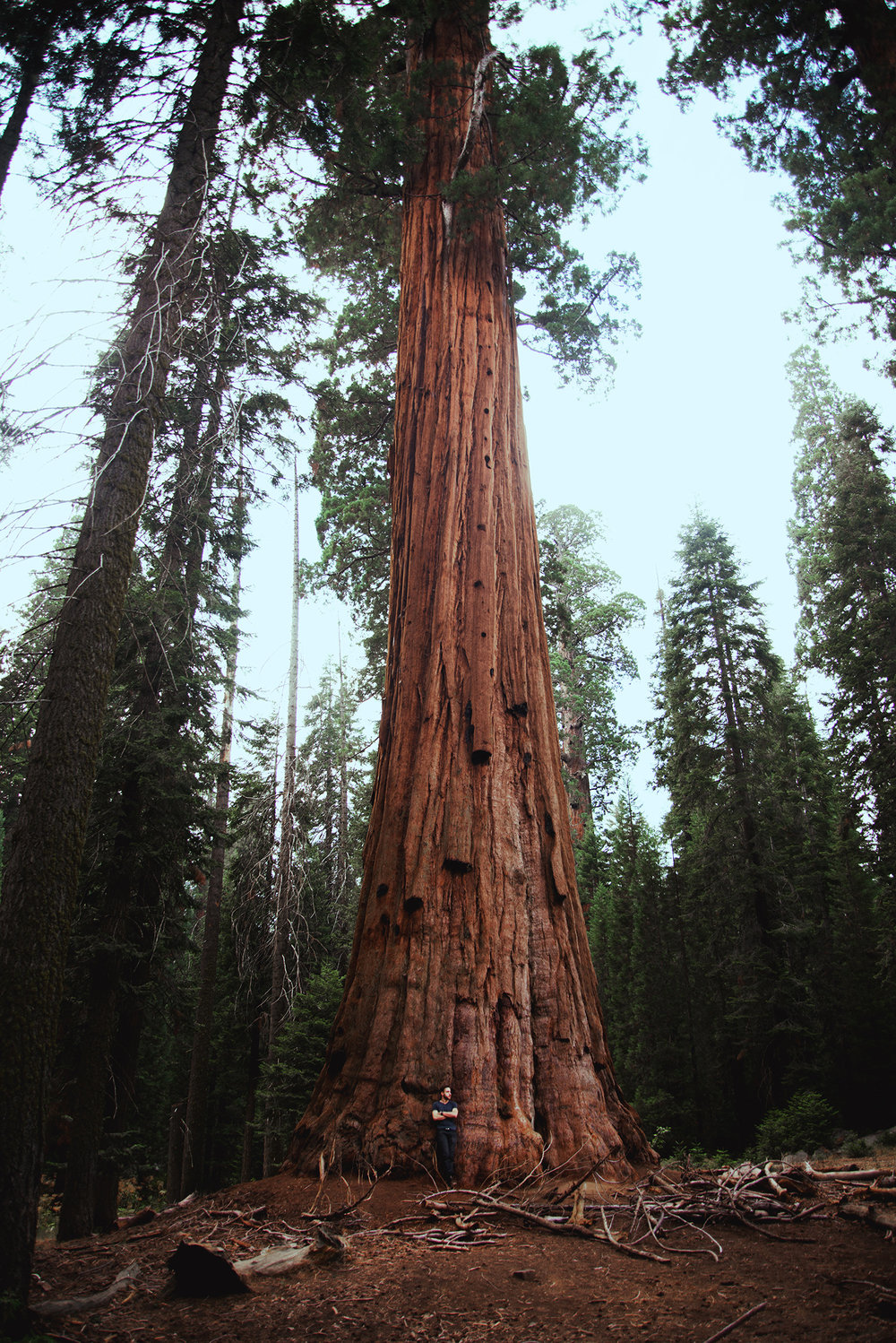 Sequoia National Park. A breathtaking place.