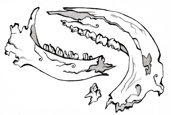 teethandjawbone.jpg
