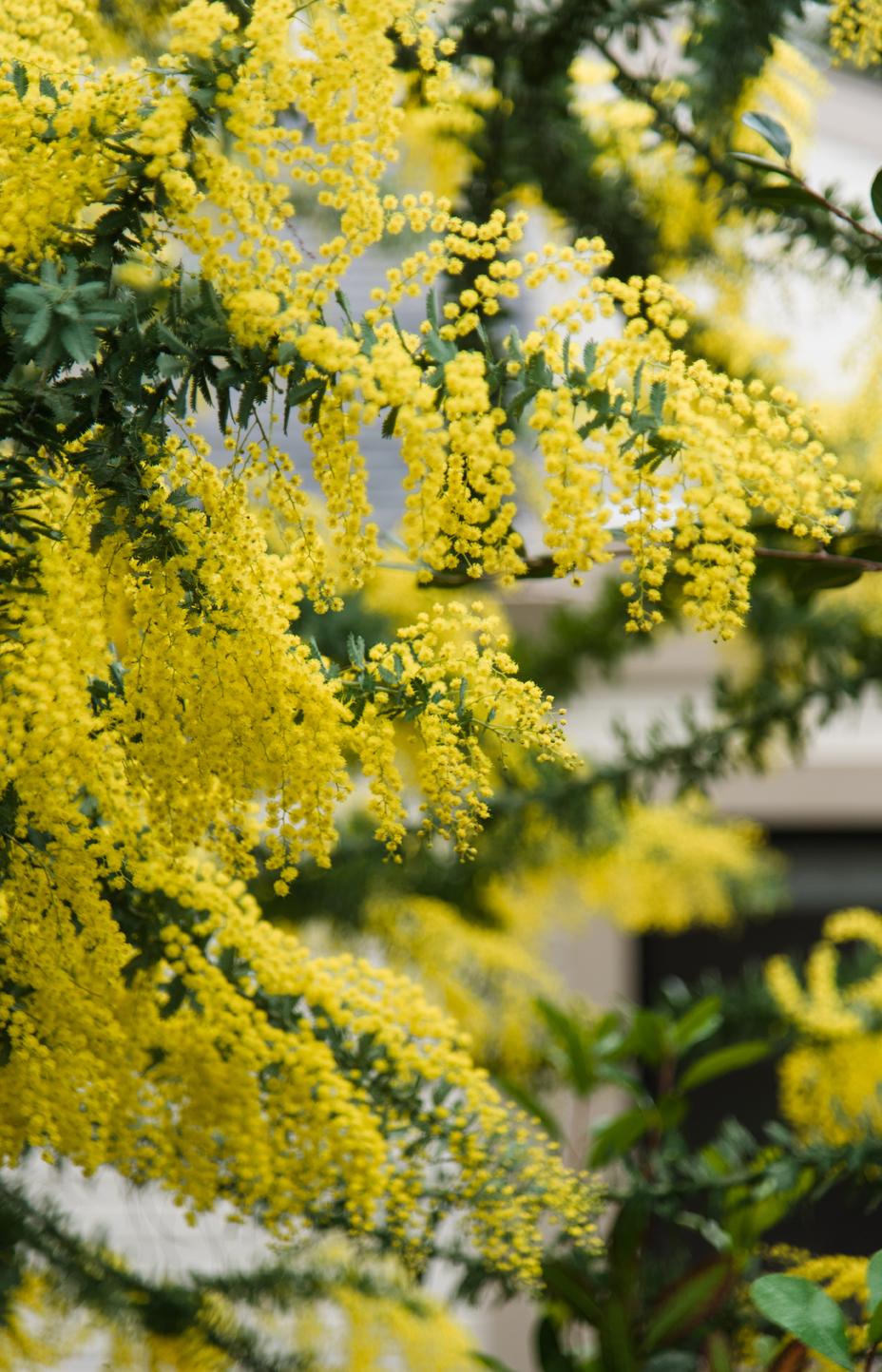 landscape photography tree flowers.jpg