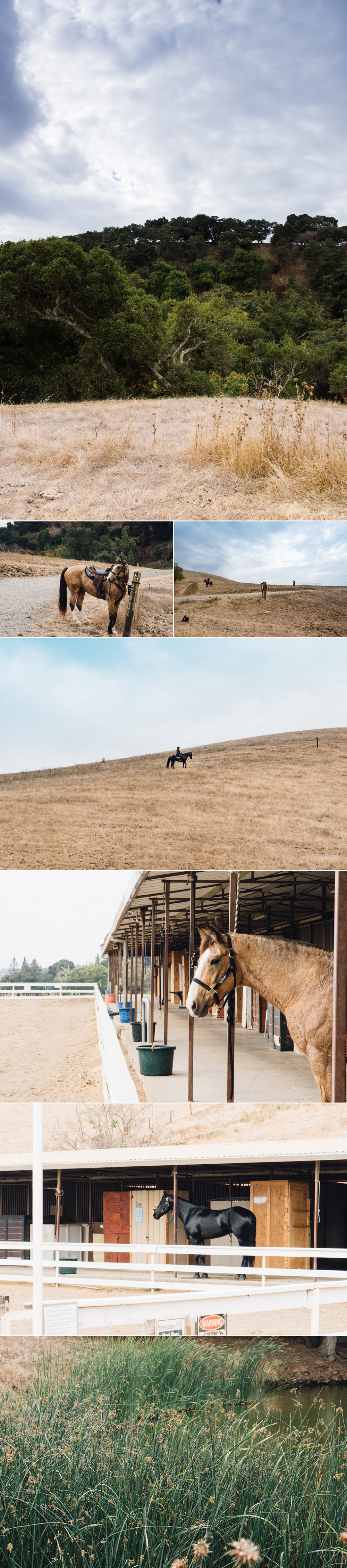 Horse and Drone-0830.png
