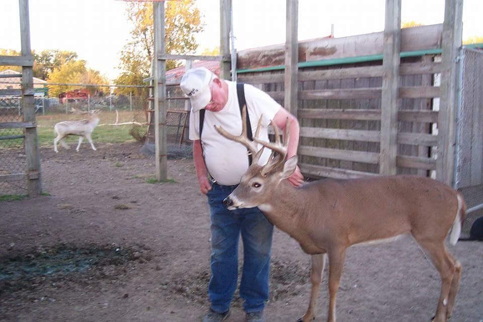 Dwight-deer.jpg
