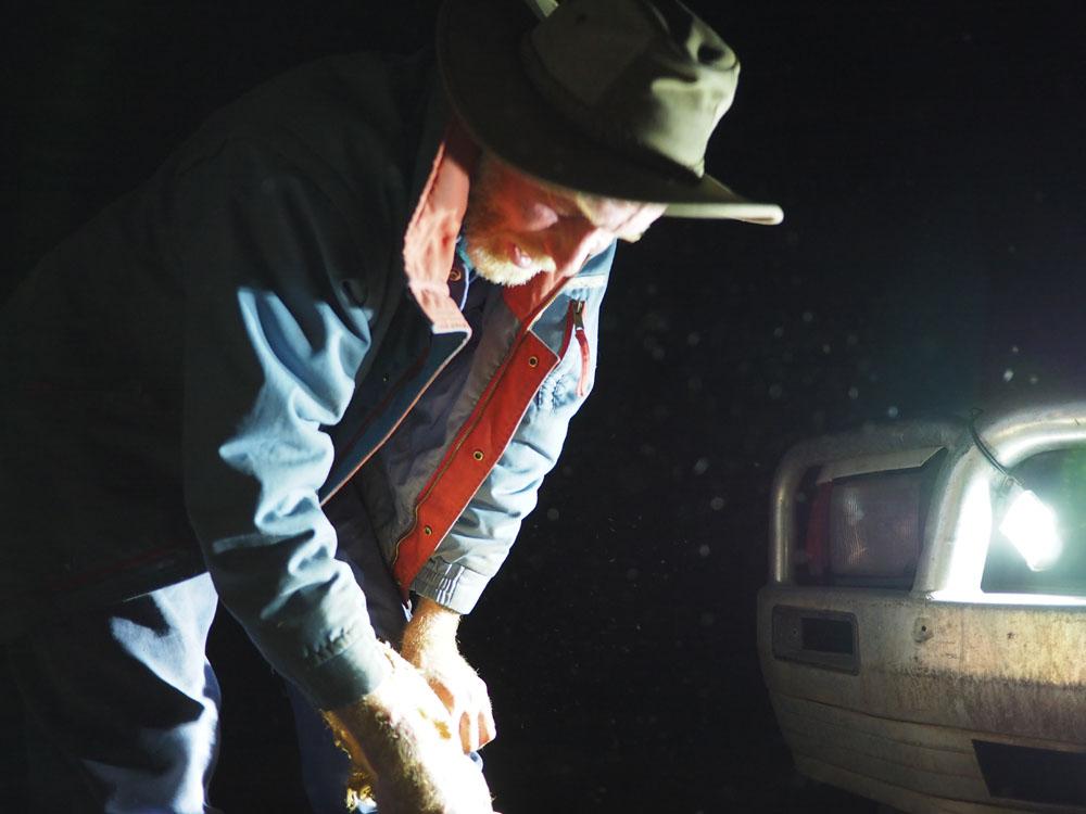 night time on wollumbin - ana petre photography