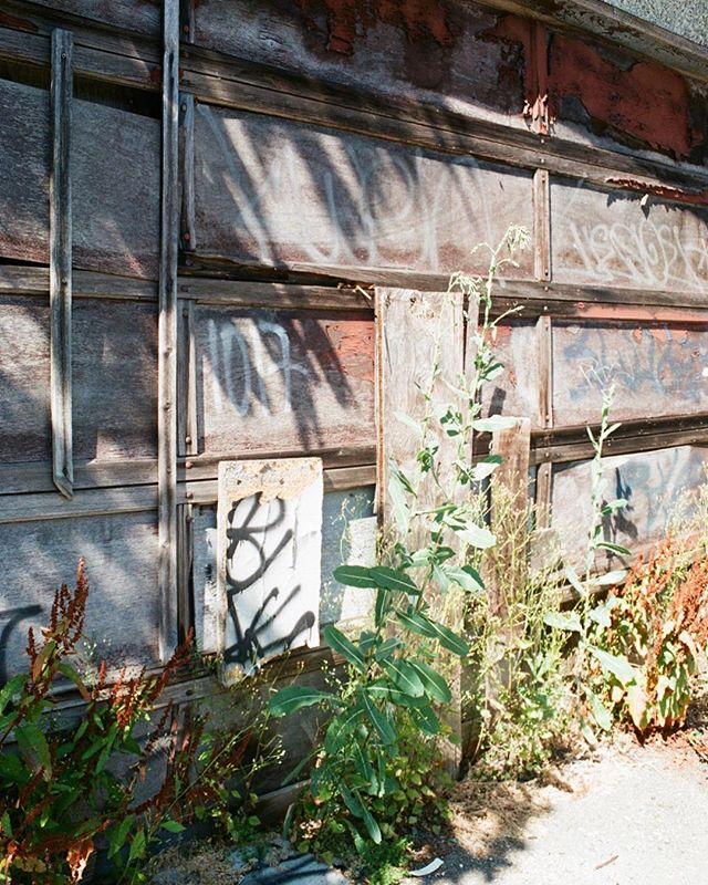 chasing sunlight in the alley ✨ - #somewheremagazine #35mm #yvr #kodizes #hurtlamb #pellicolamag #staybrokeshootfilm #eastvan