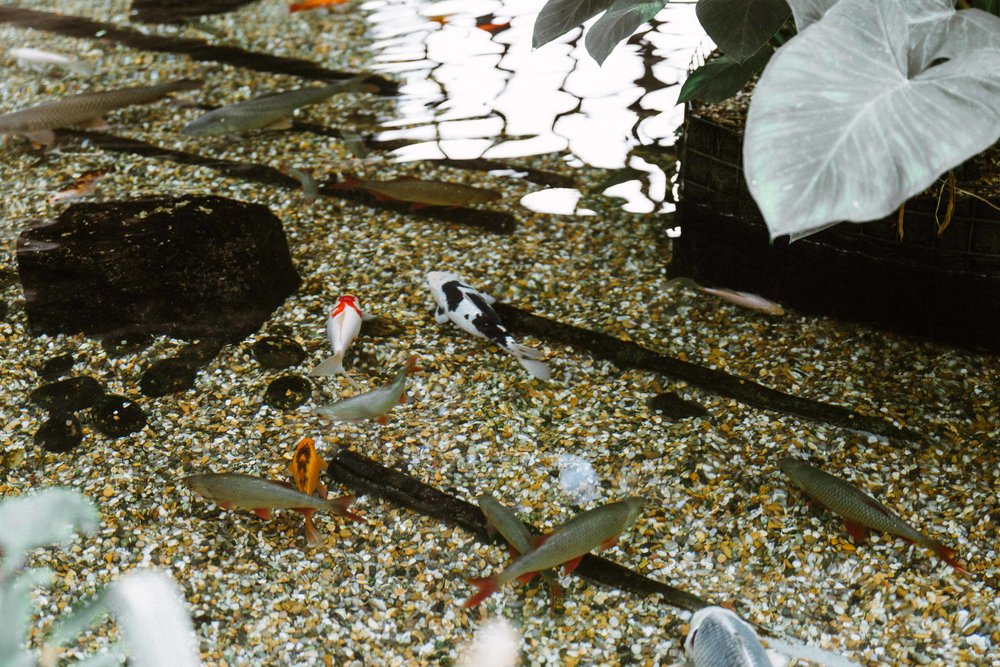 Barbican Conservatory-55.jpg