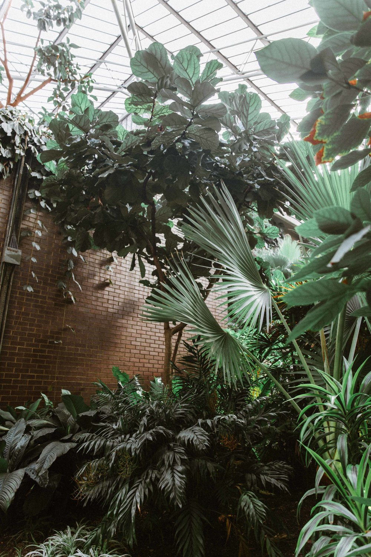 Barbican Conservatory-53.jpg