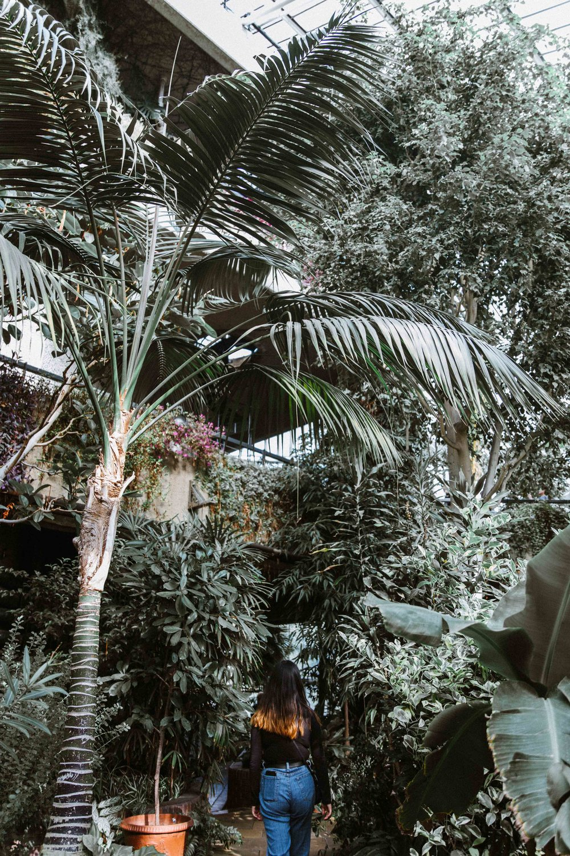 Barbican Conservatory-51.jpg
