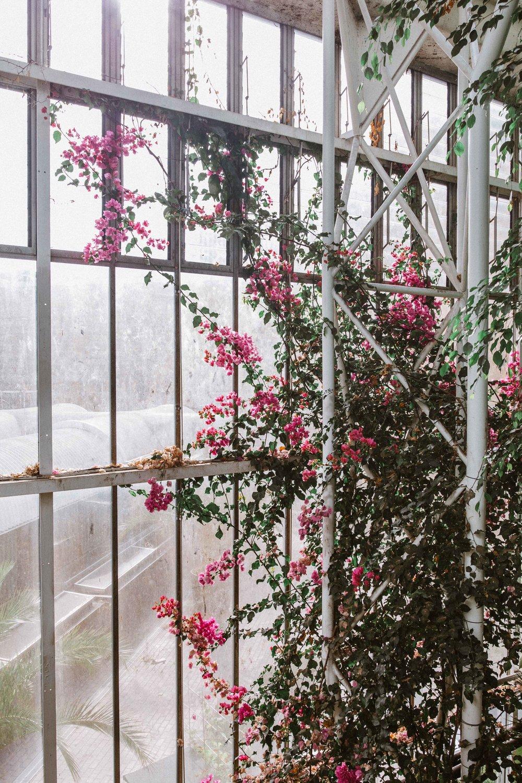 Barbican Conservatory-36.jpg